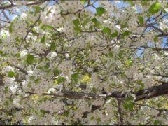 blooming1277937392